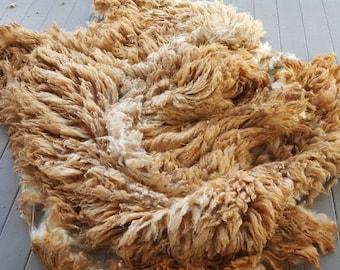 Purbred Coopworth Fleece Ewe 13 weight: 8lbs 8oz