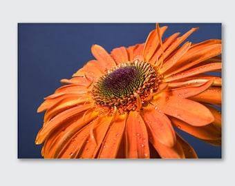 Gerbera,  Flower Wall Art, Flower Decor, Large Poster, Printable Digital Download, Native Flower Photography, Orange Flower