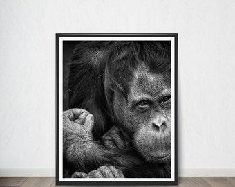 Gorilla Poster , Digital Poster, Art Print, Digital Art, Digital Art Print, Digital Artworks, Digital Print Art, Digital Art Download