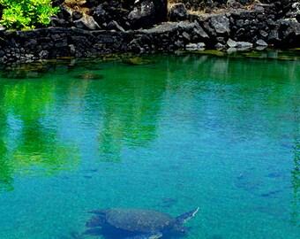 Sea Turtle Fine Art Photography - Champagne Pond Big Island Kapoho Hawaii - Tide Pool with Hawaiian Honu - Fine Art Wildlife Photography