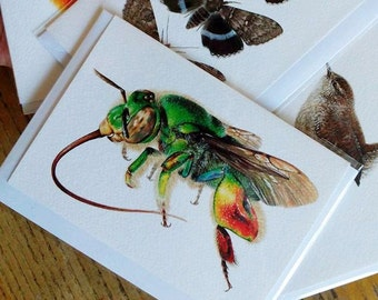 A6 Greetings Card - Euglossa sp. Orchid Bee