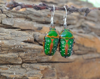 Floating Real Green & Red Beetle Earrings Stephanorrhina guttata similar to Moonrise Kingdom