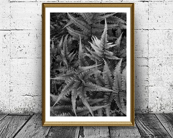 Fern Print, Fern Poster, Black and White Fern Photo, Foloral Print, Botanical Photo, Printable Art, Instant Download, Home Wall Art Decor