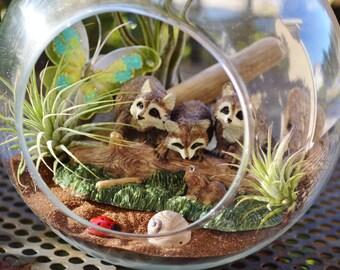 """Woodland Raccoon Terrarium  Kit ~ 7"""" Air Plant Terrarium Kit ~ Raccoon Figures ~ Housewarming gift ~ Woodland Terrarium ~ Gift ~ Christmas"""