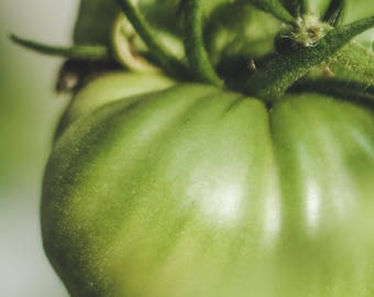 Green Tomatoes [Georgia]