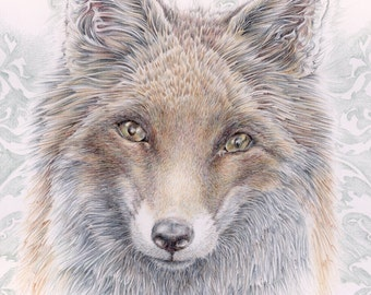 Baroque Fox print - from an original colour pencil drawing by D Y Hide, signed by the artist, also available as a greetings card