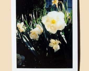 Daylilies - Instant Film Fine Art Photo