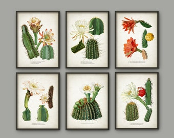 Cactus Print Set Of 6 - Vintage Cactus Illustration - Cacti Wall Art - Botanical Home Decor - Antique Cactus Book Plate Illustration - AB549