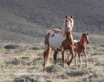 Painted Mare and Foal - Fine Art Wild Horse Photograph - Wild Horse - Fine Art Print - Green Mountain