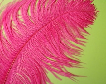 XL Hot Pink Ostrich Plumes. 13-16 inches tall. EXCLUSIVE QUALITY.
