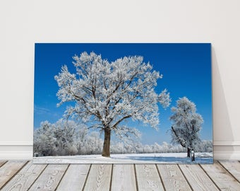 Winter trees in snow with deep blue sky picture.  Canvas Print Wall decor for home or office landscape.