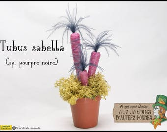 """Alien"" Tubus sabella purple plant"
