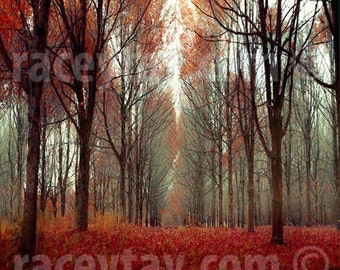 Nature Photography Rustic Wall Art Fall Forest Orange Red Brown Cabin Decor, Here there Be Dragons