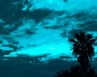 Palm trees at sunrise