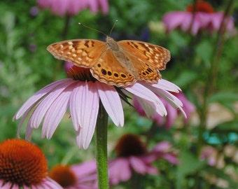 Butterfly on Purple Cone Flower  Digital Download