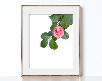 Minimalist Digital Download Pink Flowers Print Flower Photography Pink and Green Photography Botanical Art Flower Art Print Flower Poster