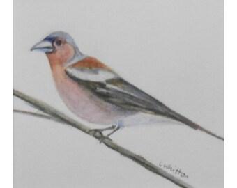 Original painting. Bird painting. Small coloured pencil painting.Unframed painting. Nature painting. Wildlife painting.