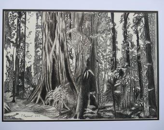 Dorrigo Rainforest Charcoal