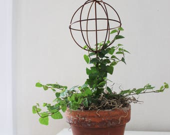 Small Creeping Fig Topiary