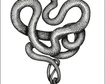 A Twisted Heart - Limited edition print of a snake -No.1