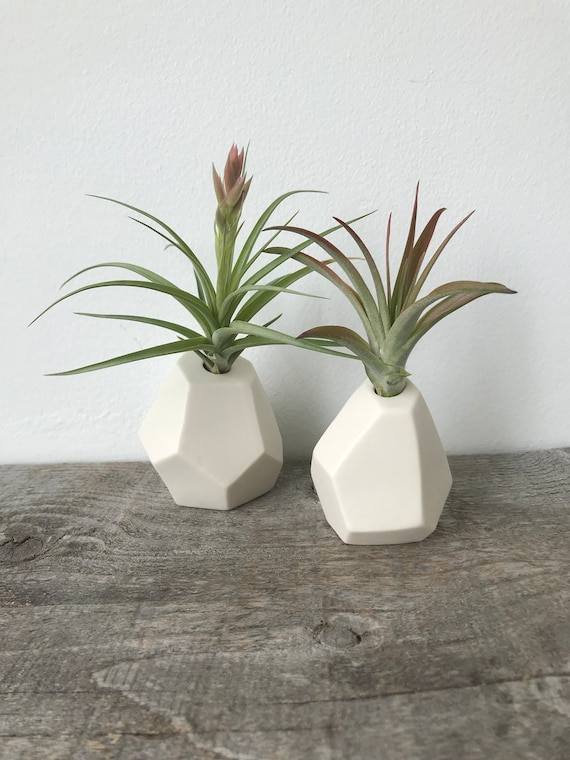 Porcelain Gemstone Air Plant Holders