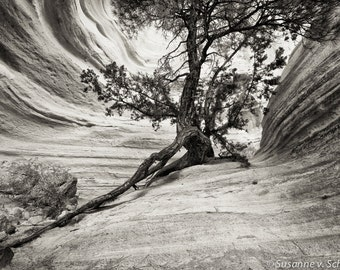 Black & White Photography, Old Tree, New Mexico, Travel Photography, Fine Art Print, Nature Photography, Ancient Tree Photo, National Park