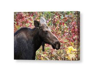 Moose Decor, Moose Canvas, Moose Art, Rustic Decor, Animal Canvas, Cabin Decor, Canadian Art, Canvas Wrap, Nature Canvas, Wildlife Canvas