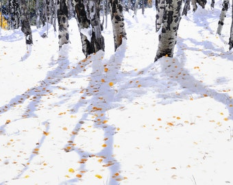 Aspen trees fall photo, Colorado aspen wall art, fall trees photo, log cabin decor, fine art photography, rustic wall art | Aspen Shadows