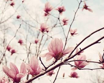 flower photo, floral photograph, pink floral art, floral nursery art, floral bedroom art, photography flower, floral prints, pink nature art