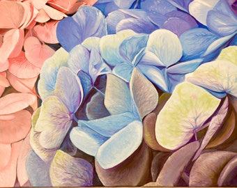 Up Close Hydrangeas