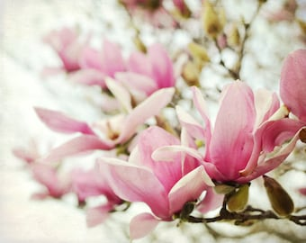 Magnolia Flowers - Botanical Print - Pink Wall Art - Gift For Her - Floral Wall Art - Bedroom Wall Art - Spring Flowers -- Magnolias