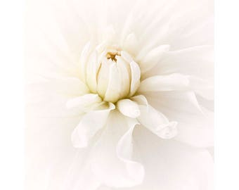White Dahlia Photograph, Flower Print, Wedding Decor,  White Wall Art, Floral Decor