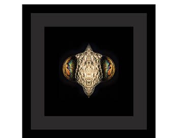 THE MANTIS - Black Frame / Black Matte