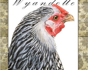 Silver-laced Wyandotte Hen Notecard: Backyard Chickens Collection