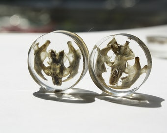 Real mouse skull and jaw 20mm ear plugs