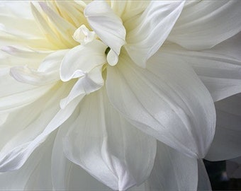 White Dahlia Photograph, Mother's Day Card, Floral  Photo Card, Flower Greeting Card, Blank Card