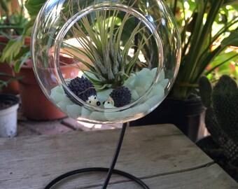 Air Plant Terrarium Kit / Hanging Glass Terrarium Globe / Terrarium Glass Kit / Glass Globe Stand