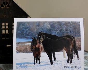 Horses in Winter Field (8) blank photo note cards with envelopes,  original photography, standard size 4.25 x 5.5