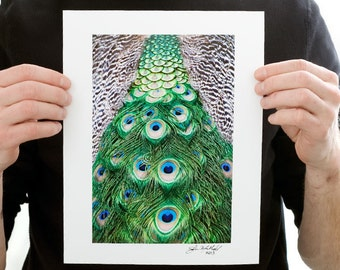Peacock Feathers Photograph (9 x 6 inch Fine Art Print) Animal & Nature Photography Bird Home Decor