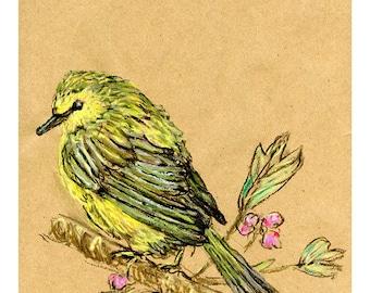 5x7 print Warbler - Bird Art mixed media drawing