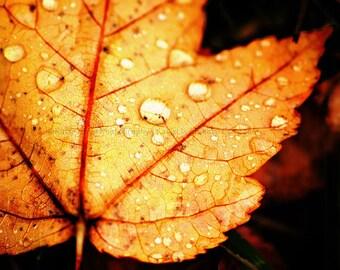 Maple Leaf Art Print - Fine Art Nature Photography - Fall Foliage Home Decor Photo - Gallery Wall Art - Autumn Wall Decor