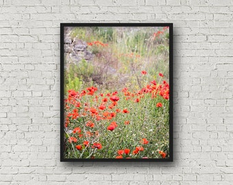 Red Flowers Print / Digital Download / Fine Art Print/ Wall Art / Home Decor / Poppies Color Photograph / Nature Print / Nature Photography