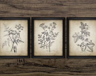 Antique Botanical Print Set of 3 - Plant Botanical Art Decor - Digital Art - Printable Art - Set Of Three Prints #187 - INSTANT DOWNLOAD
