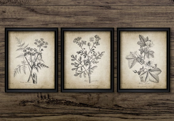Antique Botanical Print Set of 3