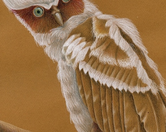 Crested Owl Original Drawing