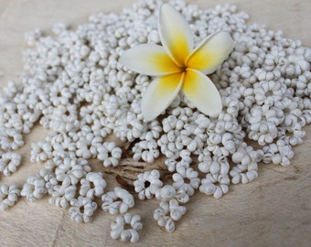 Mongo shell rosettes- white-mung shell ring, Tahitian costume, lei making, Polynesian crafts