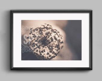 Seedhead fine art photographic print. 20 x 30 cm.