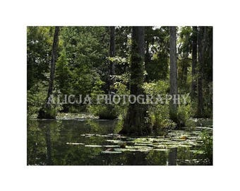 Swamp Tree Photo, Nature, Print, Photograph, Art Decor, Wall Decor, House Decor, Fine Art Photography
