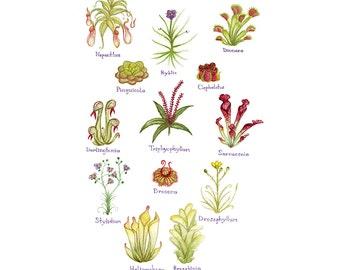 Carnivorous Plants Field Guide Art Print / Watercolor Painting / Wall Art / Nature Print / Botanical Art