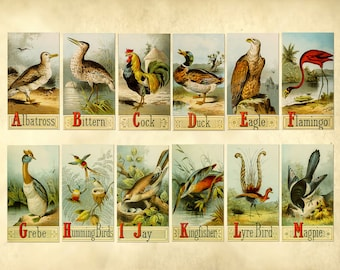 Old Vintage Picture alphabet of birds - ABC Cards - School ABC cards - Educational Flash Cards for Learning - Alphabet Letter Cards